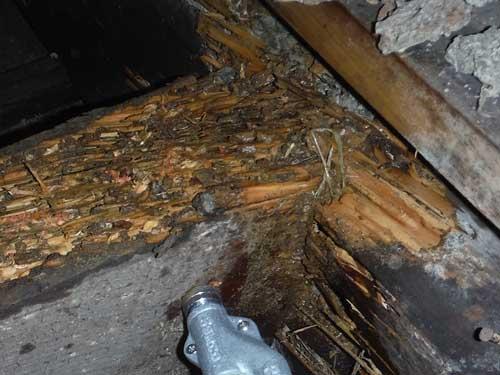 天井裏のシロアリ駆除施工