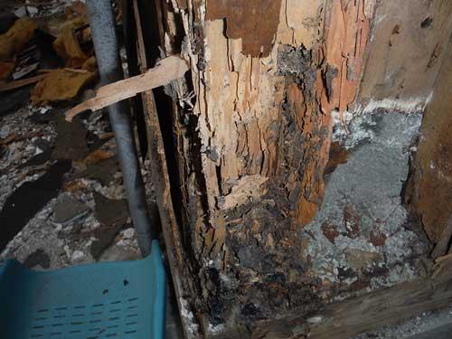 柱のシロアリ被害(風呂場)
