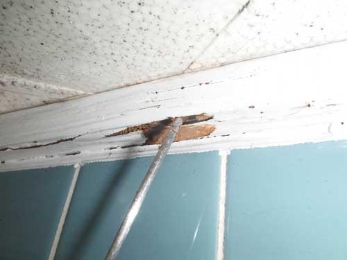 風呂場の白アリ被害