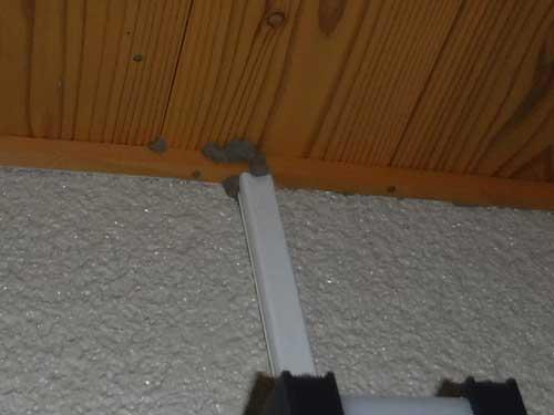 玄関のイエシロアリ被害