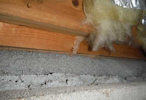 床下の蟻道写真