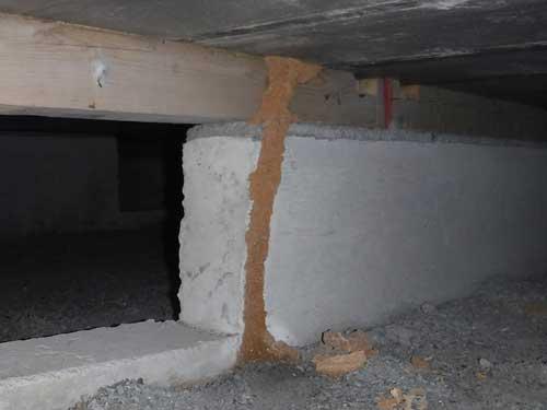 修復されたイエシロアリの蟻道(施工当日)