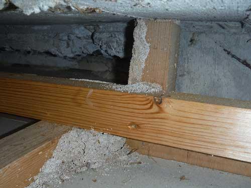 天井裏のシロアリ被害