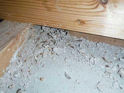 天井裏の羽アリの死骸