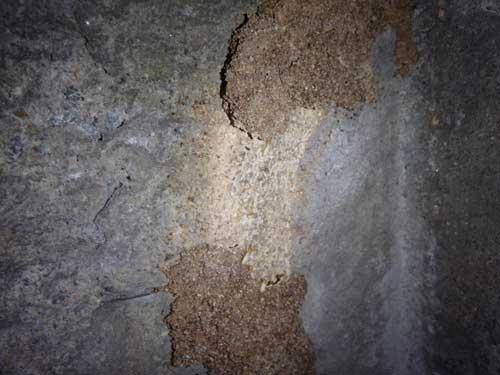 蟻道の内部