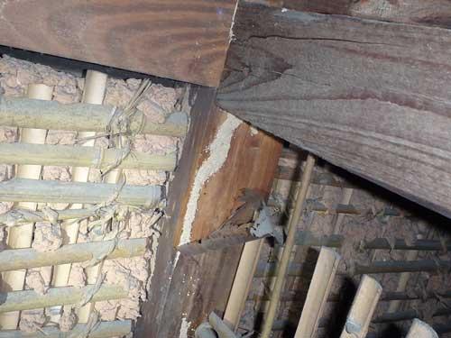 天井裏の蟻道