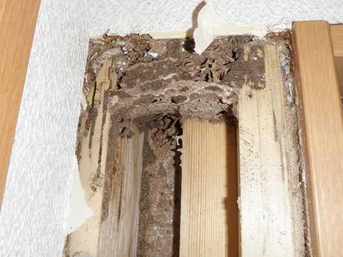 壁を剥ぐとシロアリ被害