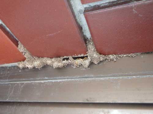 壁の隙間の蟻土
