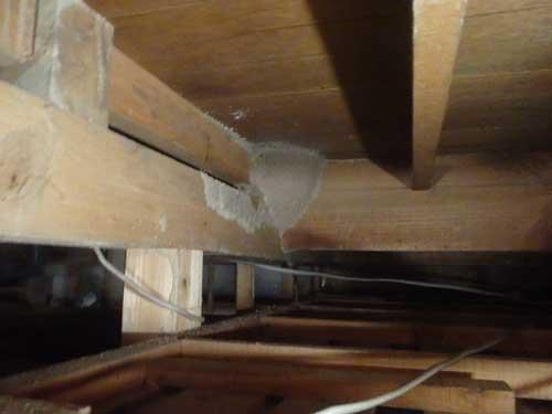 中天井分巣