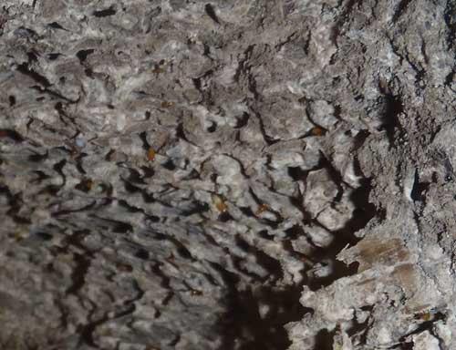 分巣の内部