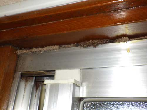 風呂場の羽アリの発生場所
