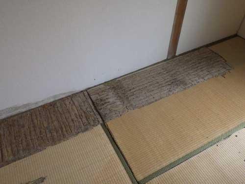 畳のシロアリ被害