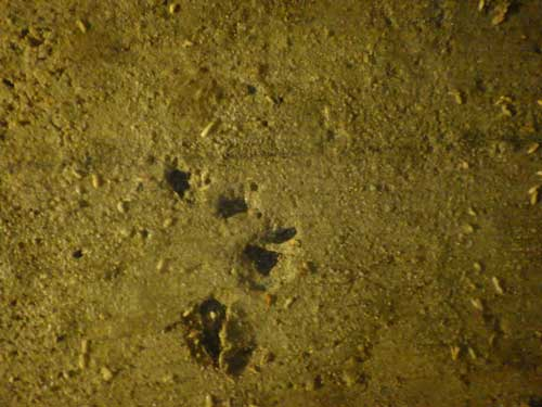 蟻道の外で痙攣するシロアリ