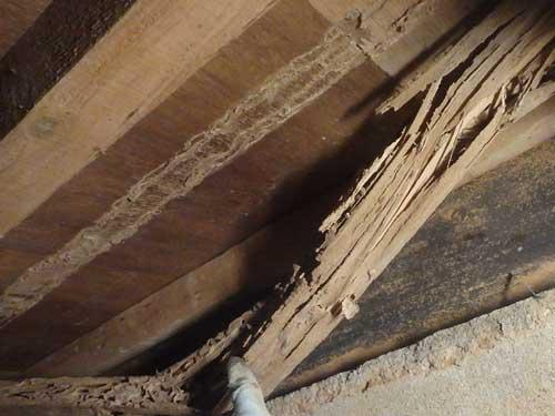 床下のヤマトシロアリ被害