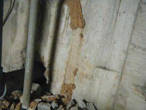 巣の駆除後の蟻道